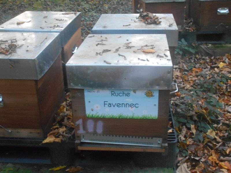 La ruche Favennec