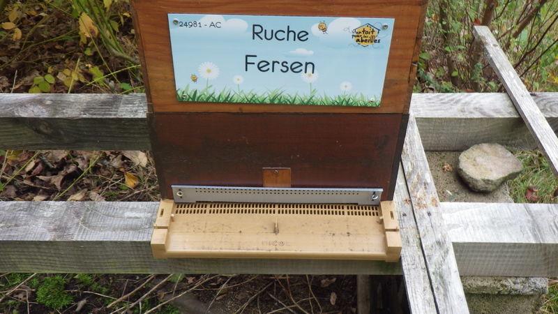La ruche Fersen