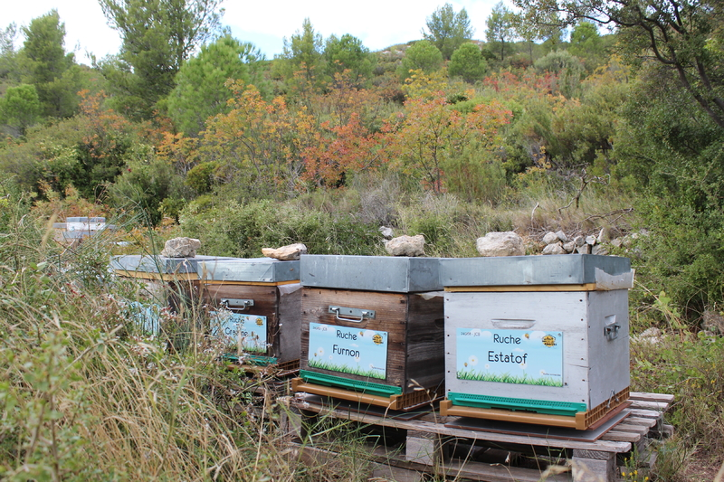 La ruche Furnon