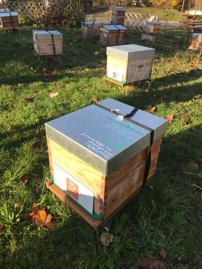 La ruche Alice Délice Boulogne