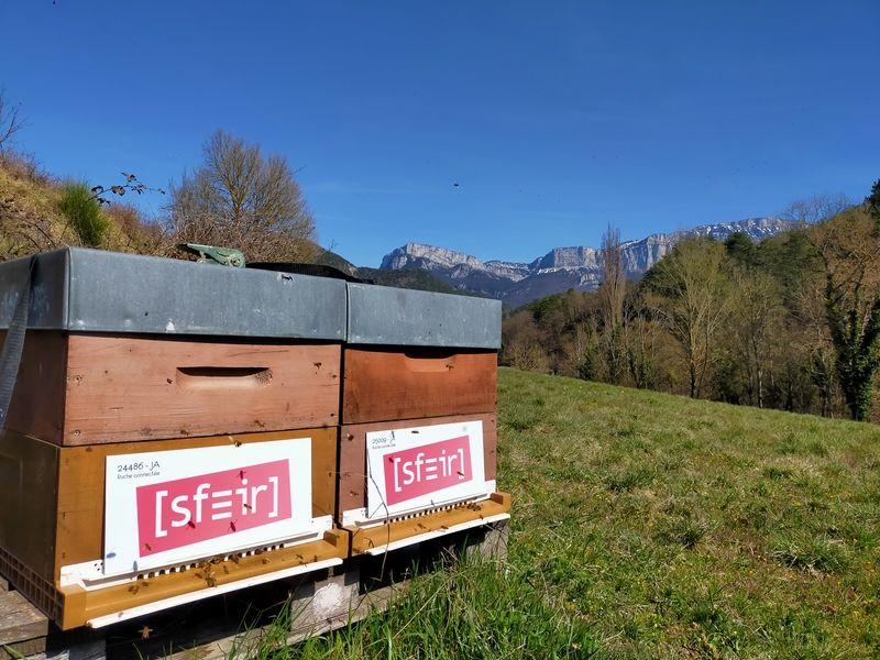 La ruche sfeir