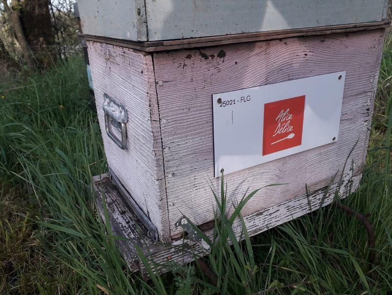 La ruche Alice Délice Metz