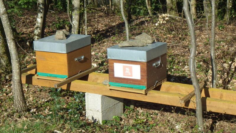 La ruche Alice Délice Reims