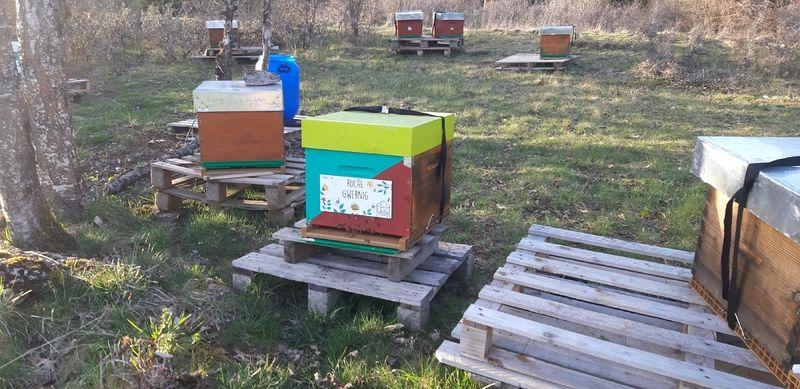 La ruche Gwernig