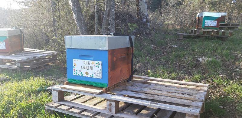 La ruche Chardeau
