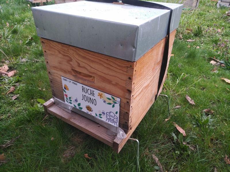 La ruche Jouno