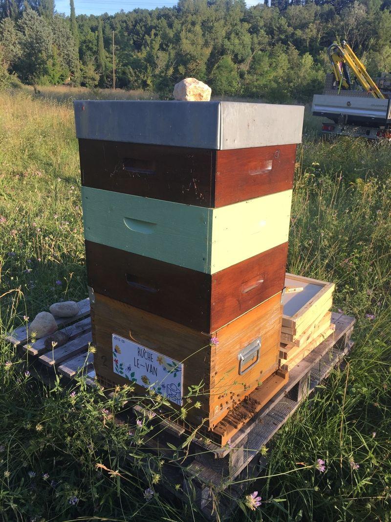 La ruche Le-Van