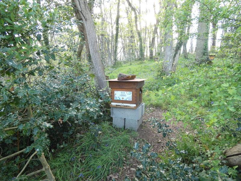 La ruche Lubrano