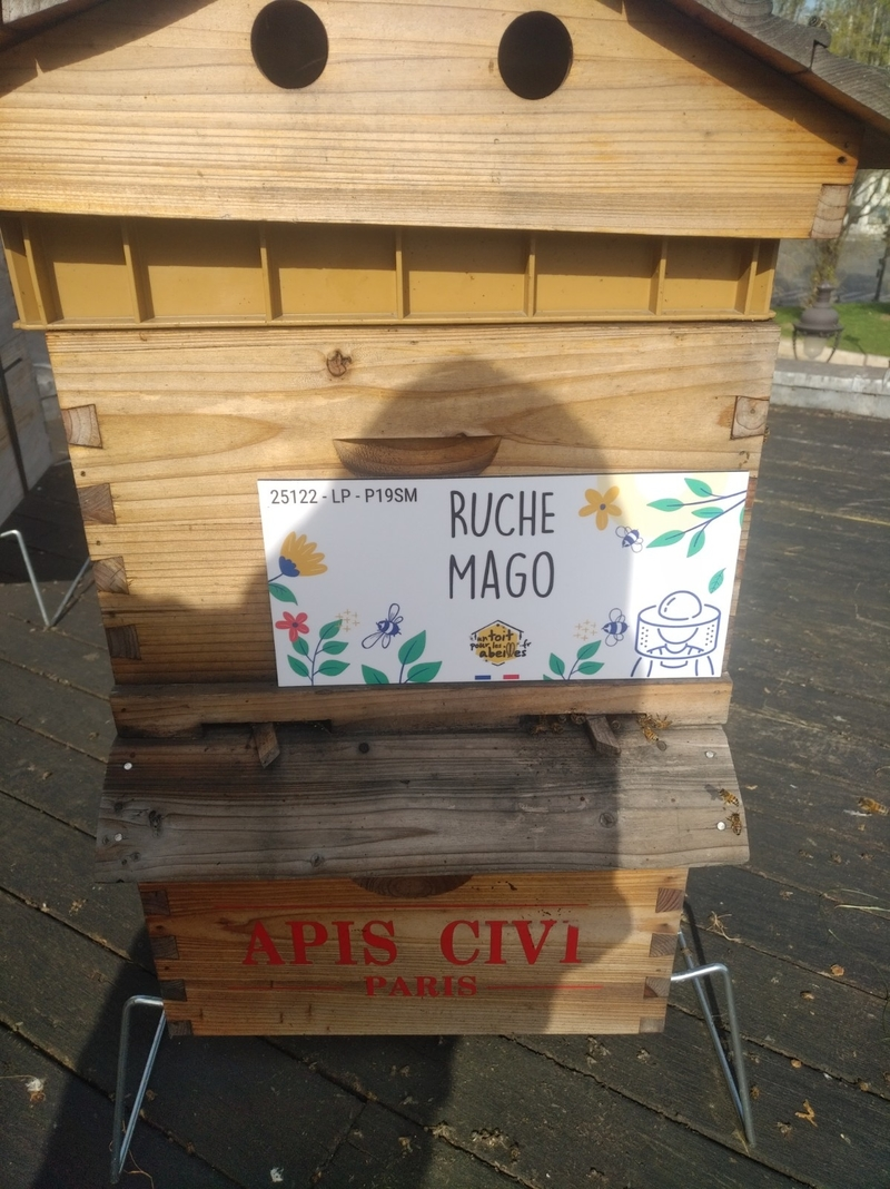 La ruche Mago