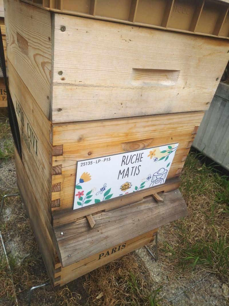 La ruche Matis