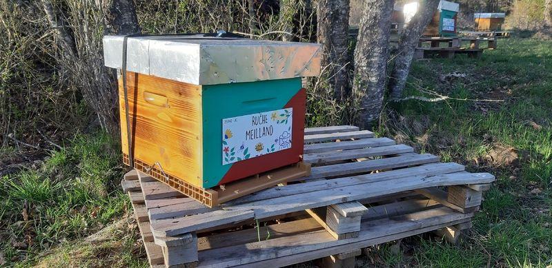 La ruche Meilland