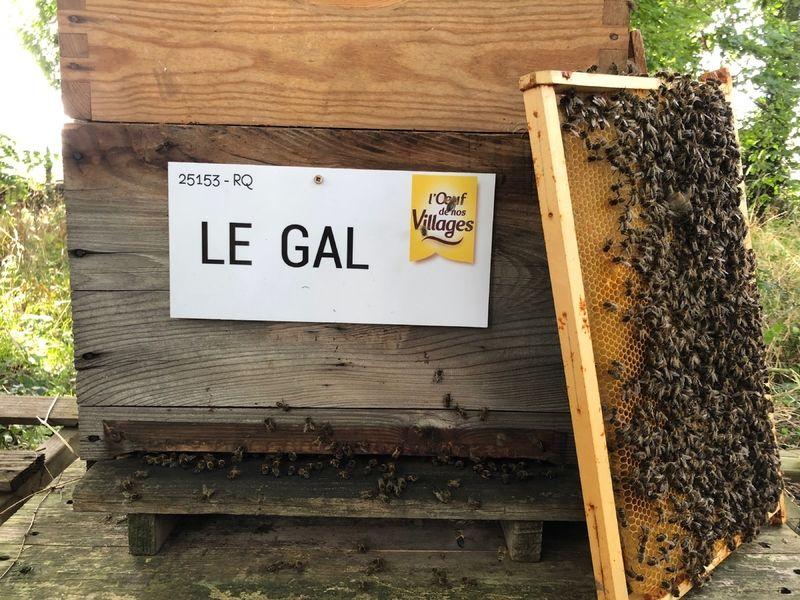La ruche LE GAL