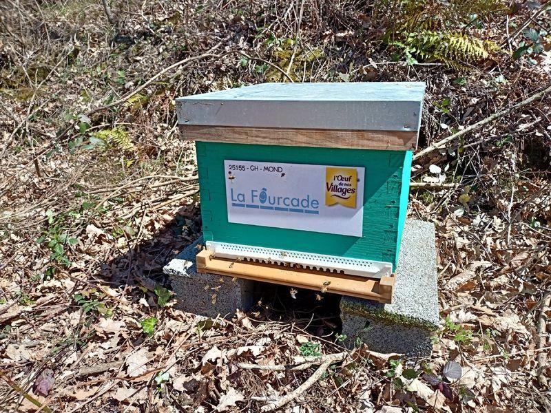 La ruche La Fourcade