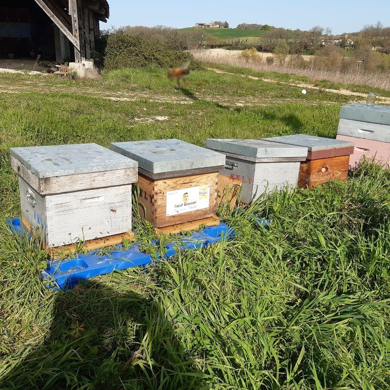 La ruche L OEUF GASCON