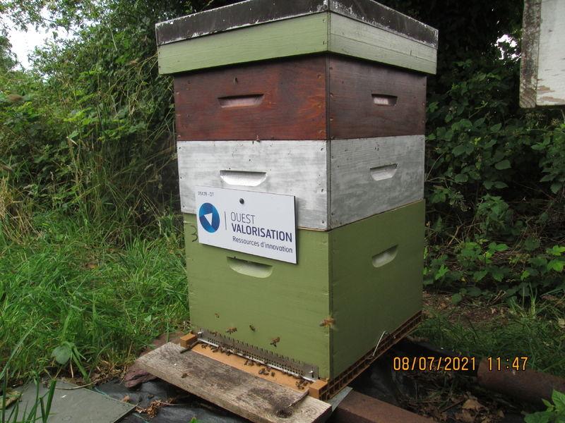 La ruche SATT OUEST VALORISATION