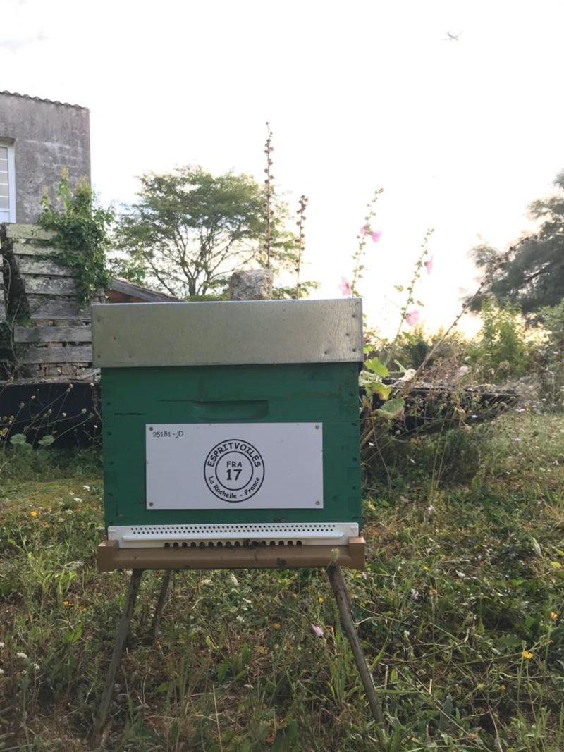 La ruche ESPRITVOILES
