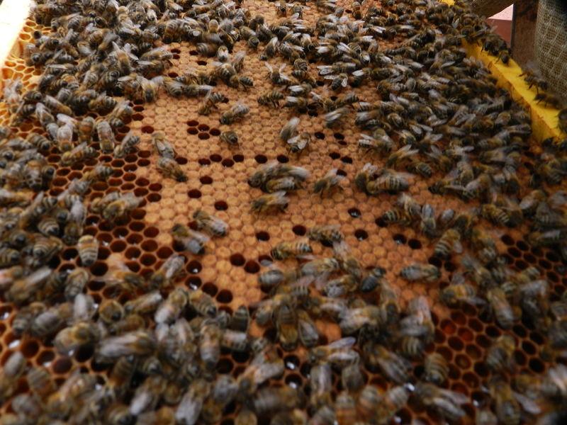 La ruche 123webimmo Agences de la Vienne