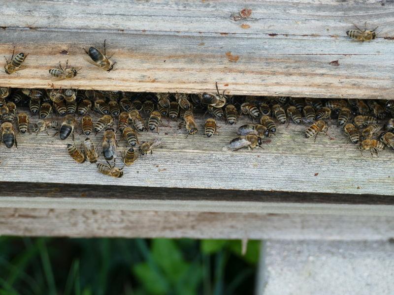 La ruche SII Est