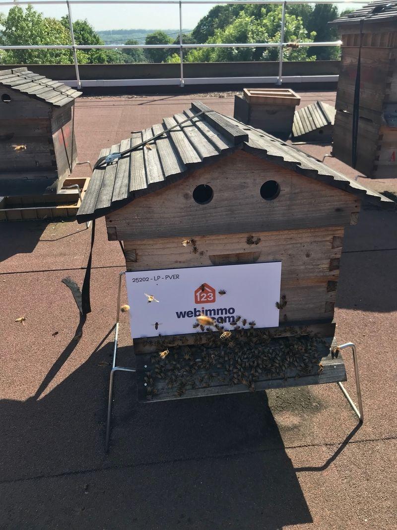 La ruche 123webimmo Sceaux