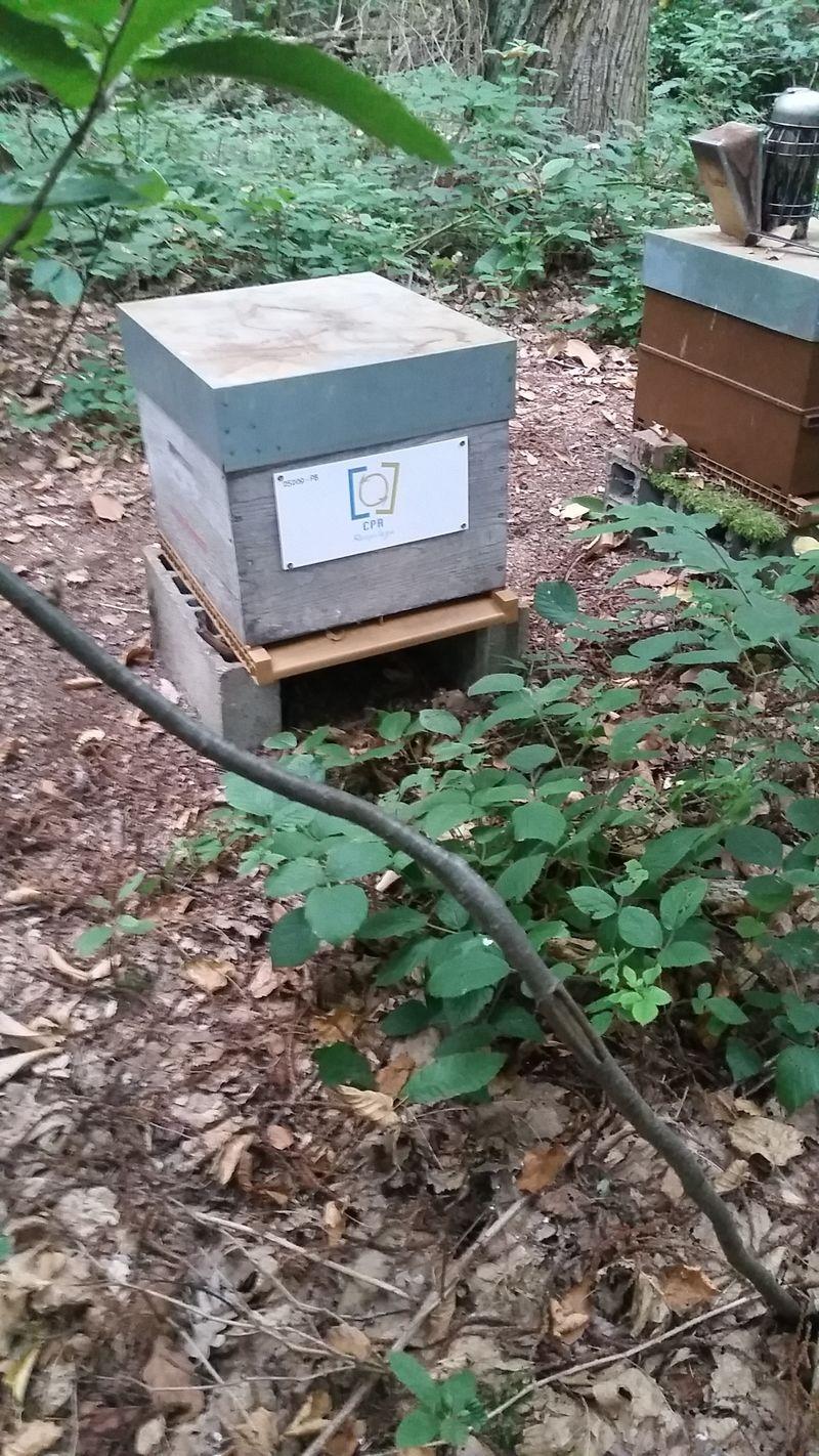 La ruche CENTRE PARISIEN DE RECYCLAGE