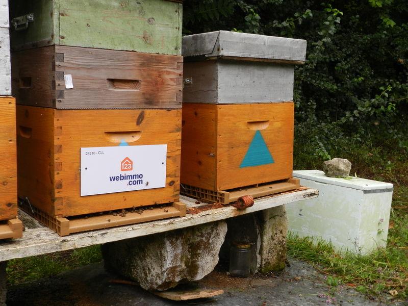 La ruche 123webimmo agence de Tours