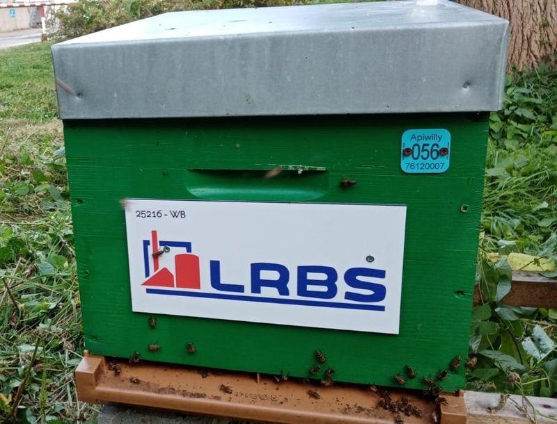 La ruche LRBS