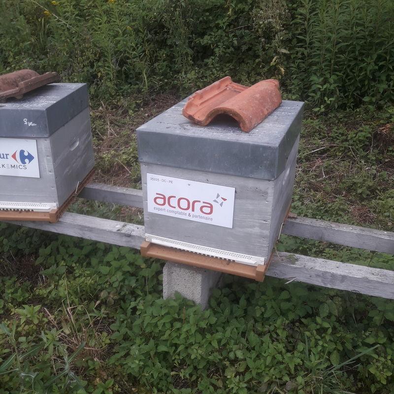 La ruche ACORA