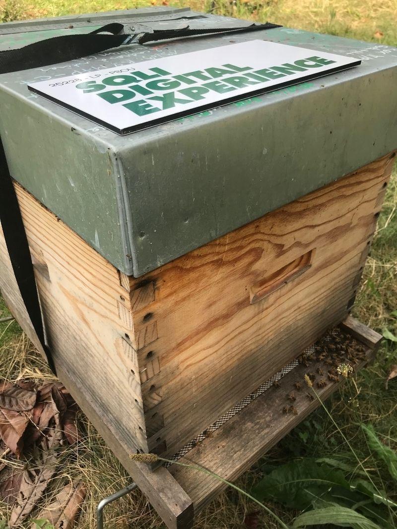 La ruche SQLI