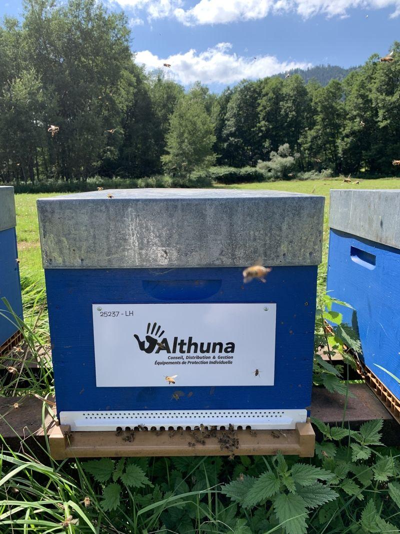 La ruche ALTHUNA