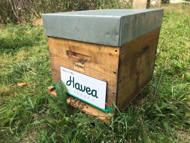 La ruche Havea