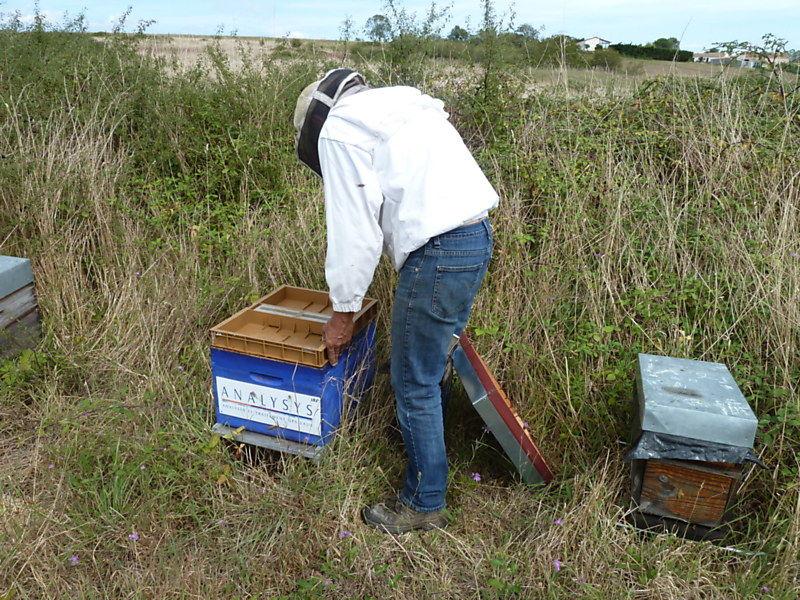 La ruche ANALYSYS SAS