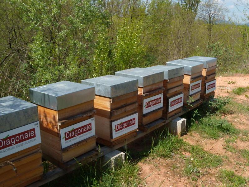 La ruche Diagonale