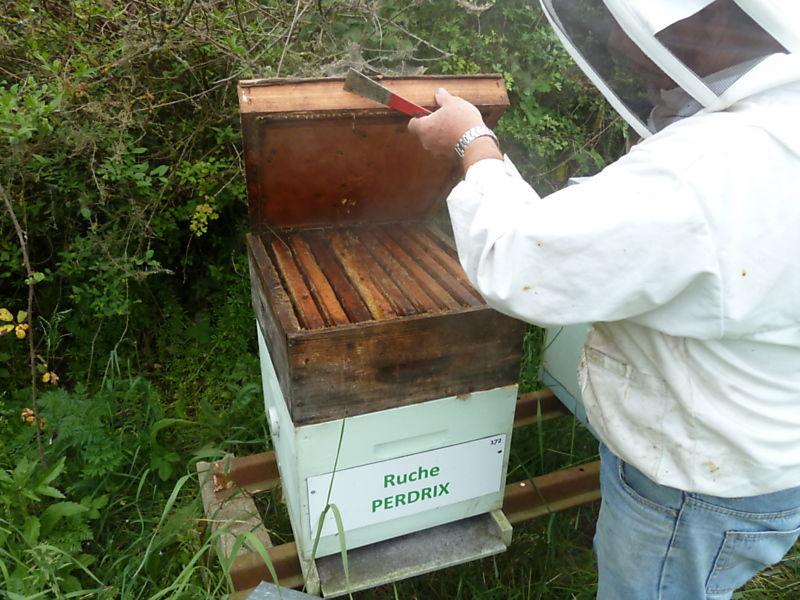 La ruche Perdrix
