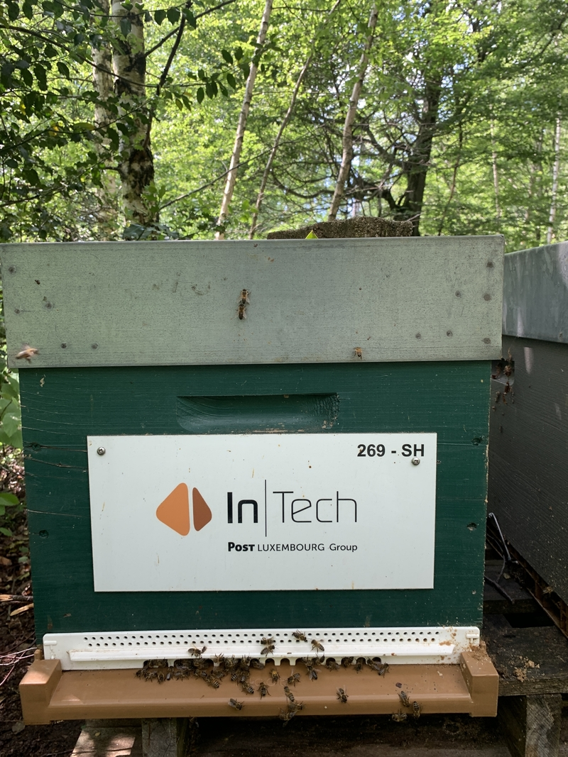 La ruche InTech S.A.