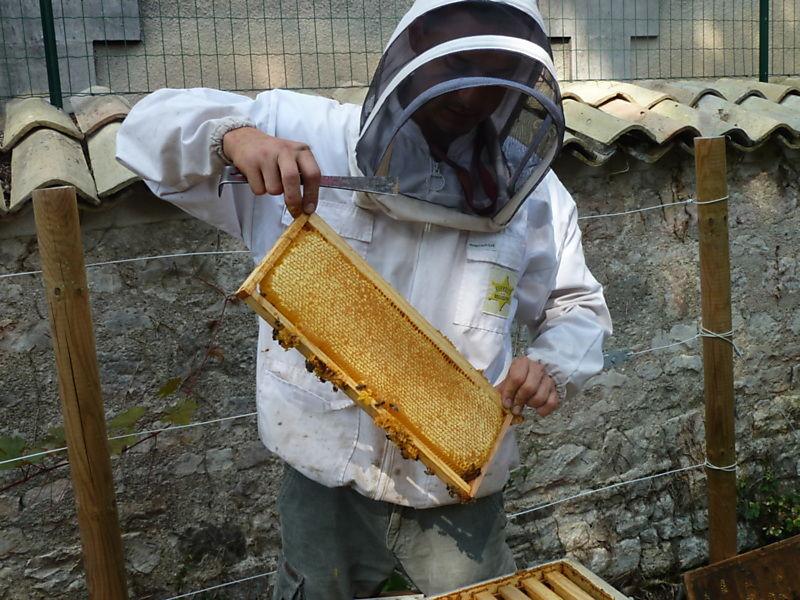 La ruche LOUIS ROYER  SAS