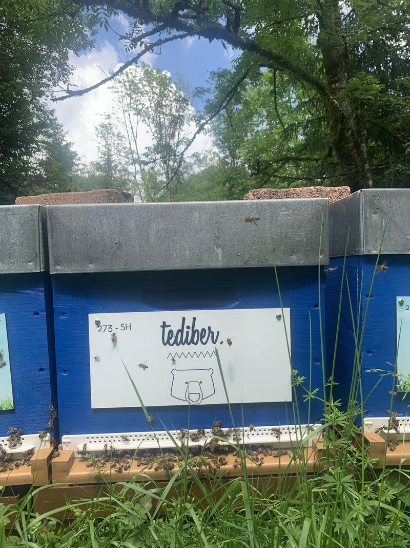 La ruche TEDIBER