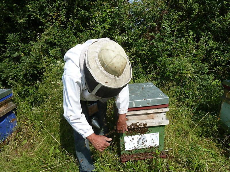 La ruche CLAMENS