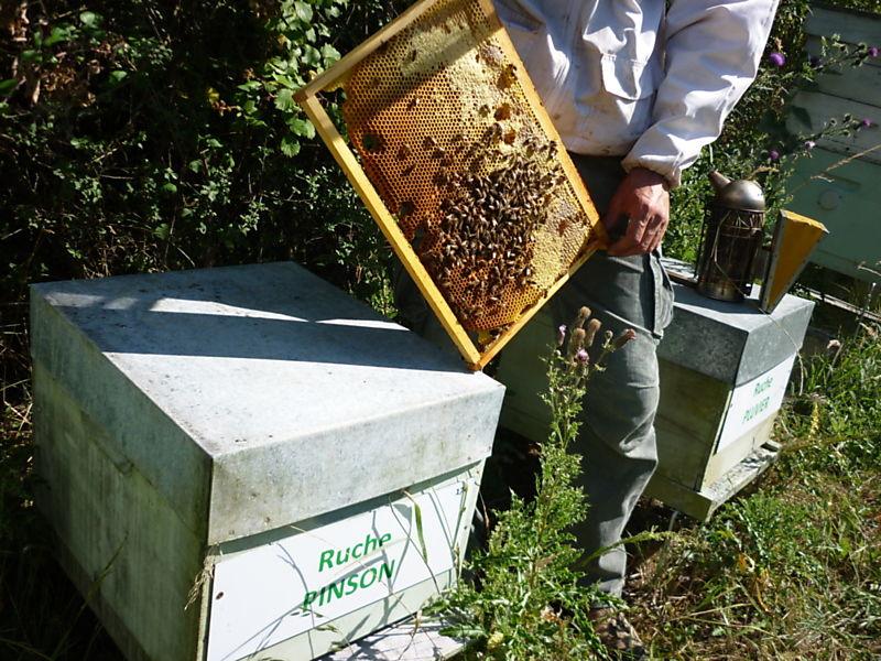 La ruche Pinson