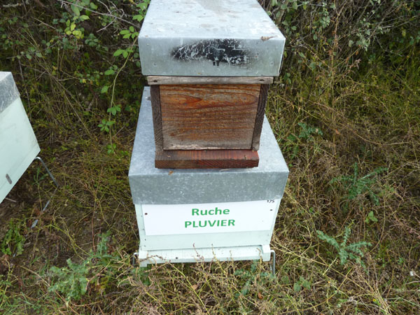 La ruche Pluvier