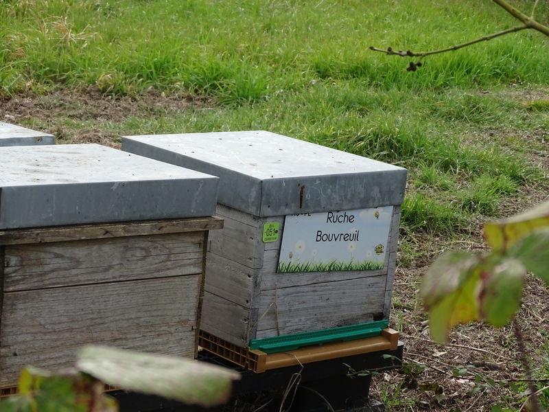 La ruche Bouvreuil