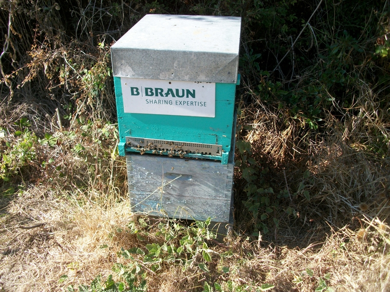 La ruche B  Braun Medical