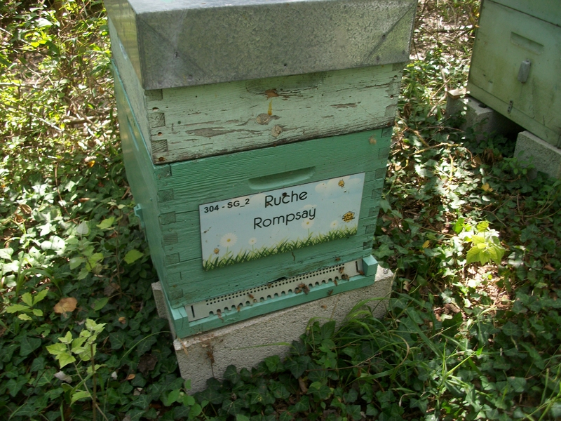 La ruche Rompsay
