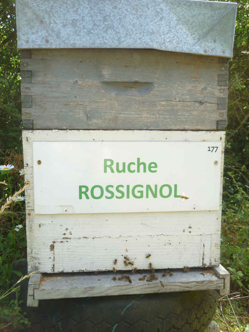 La ruche Rossignol