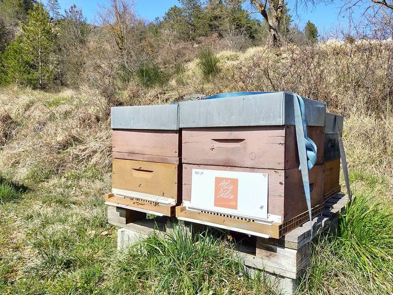 La ruche Alice Délice Thoiry
