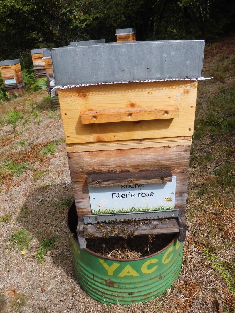 La ruche Féerie rose