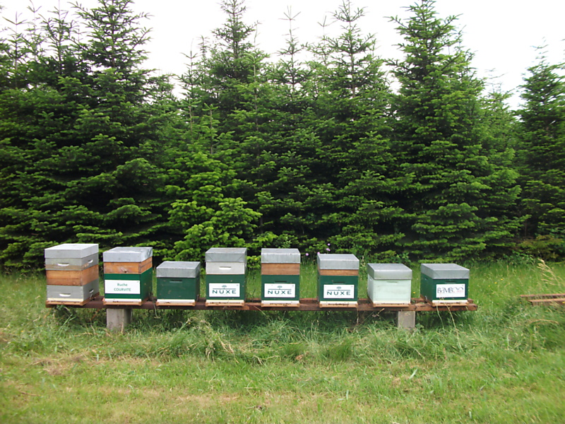 La ruche LABORATOIRE NUXE