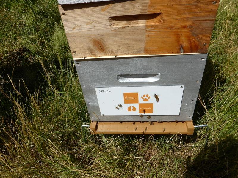 La ruche FONDATION PURESSENTIEL