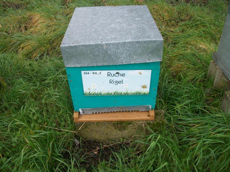 La ruche Rigel