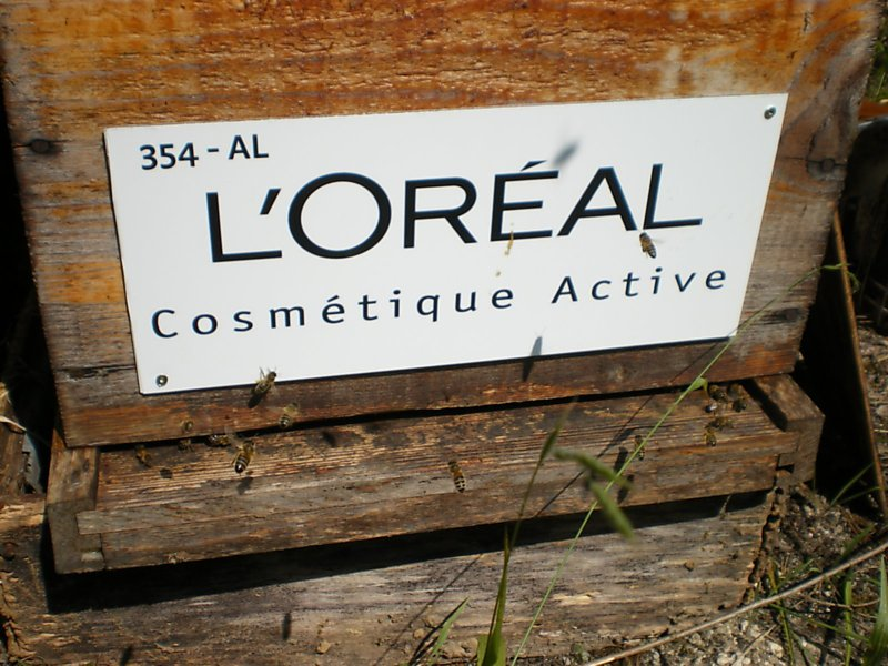La ruche L OREAL COSMETIQUE ACTIVE