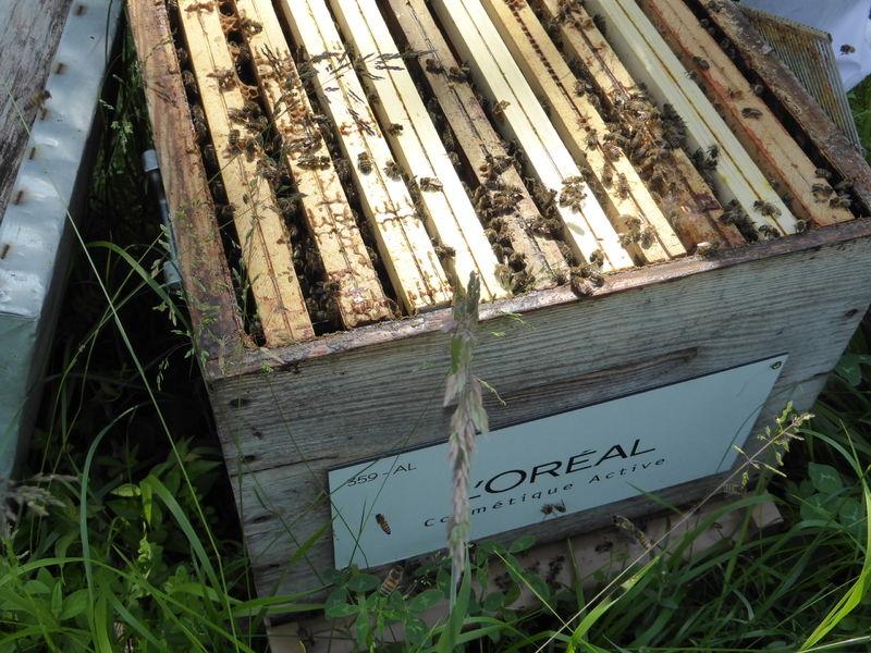 La ruche L OREAL COSMETIQUE ACTIVE